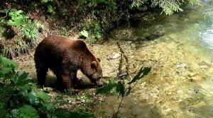 Plitvicer Seen Bär