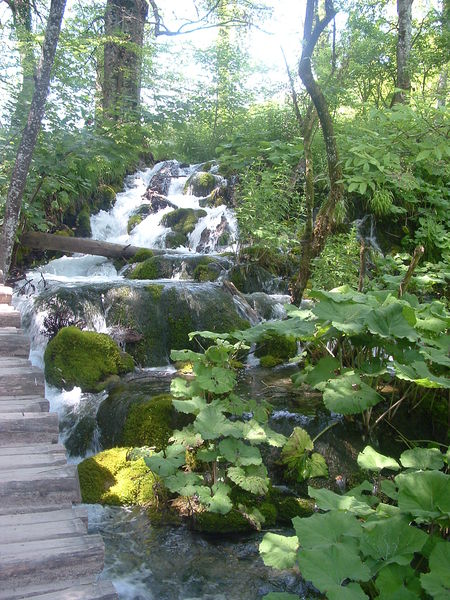 Plitvicer Seen Wald
