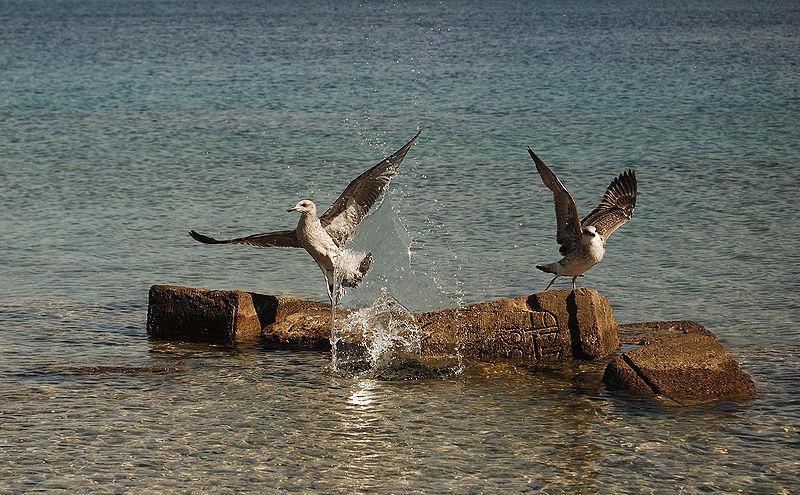 Oiseau hein