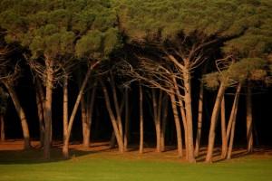 Briunij Wald