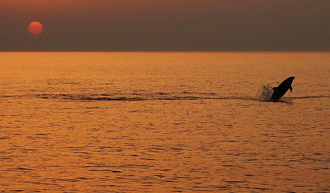 Delphine im Naturpark Telascica